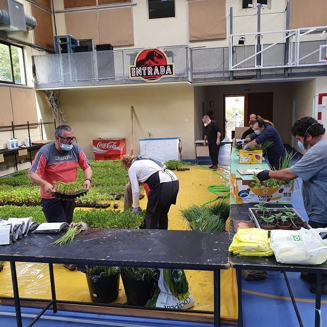 Reparto de Plantones en Montejo