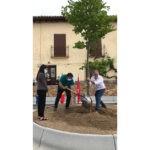Montejo de la sierra inaugura su nueva plaza, plantando un haya