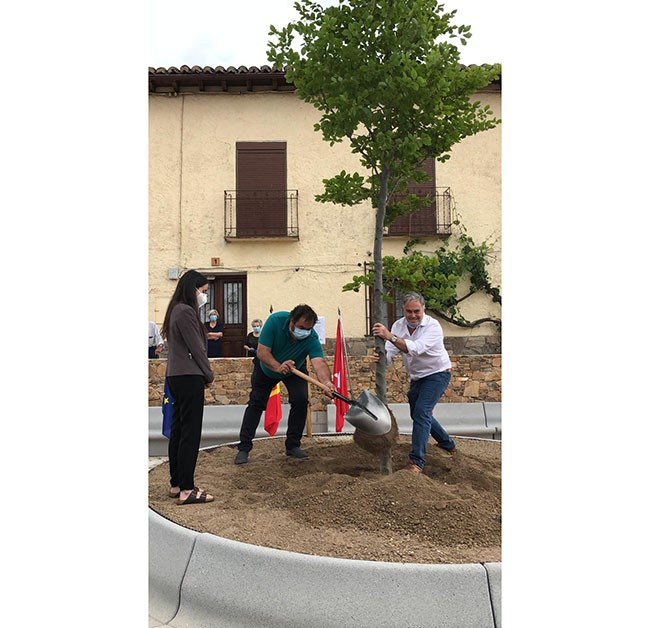 Montejo de la sierra inaugura su nueva plaza, plantando un haya 🌳 por Europa